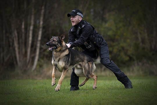 Ministry-of-Defence-MOD-Police-dog-handler-Defence-Equipment-and-Support-DE&S